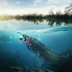 LIVE-FISH-NEW