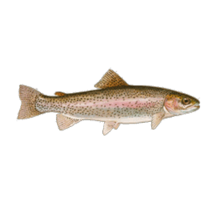 trout-icon-new