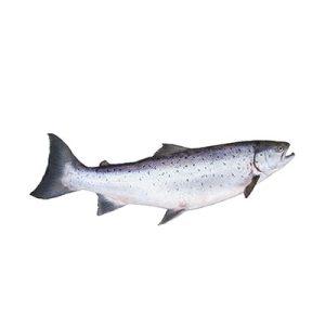 trout-icon