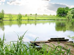 understanding algae in your pond