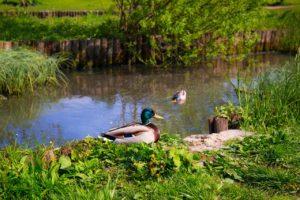 pond supplies near me