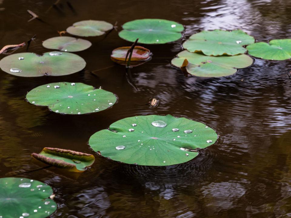 pond supplies online